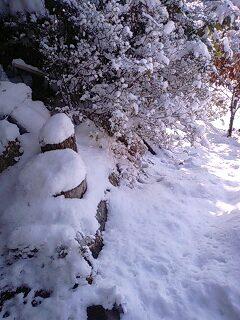 110215雪景色1.jpg
