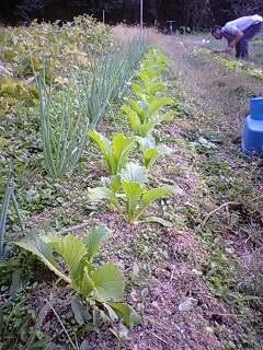 121009竹の子白菜.jpg