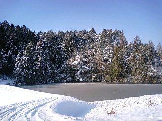 110215雪景色池2.jpg